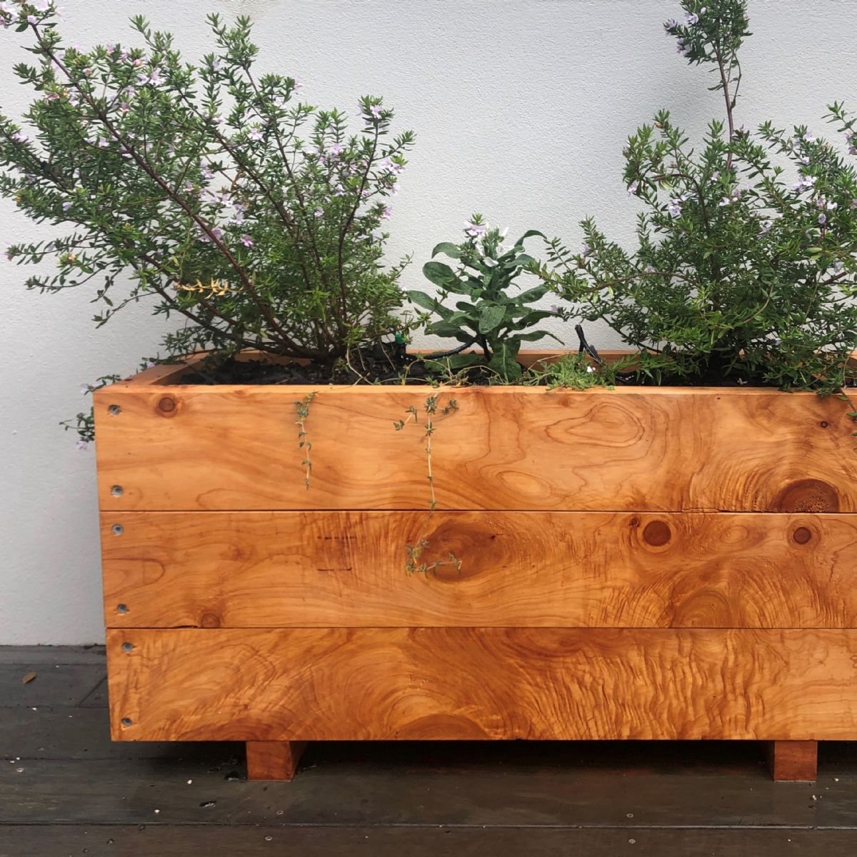 MACROCARPA PATIO PLANTER BOX: 375x470x1.0M